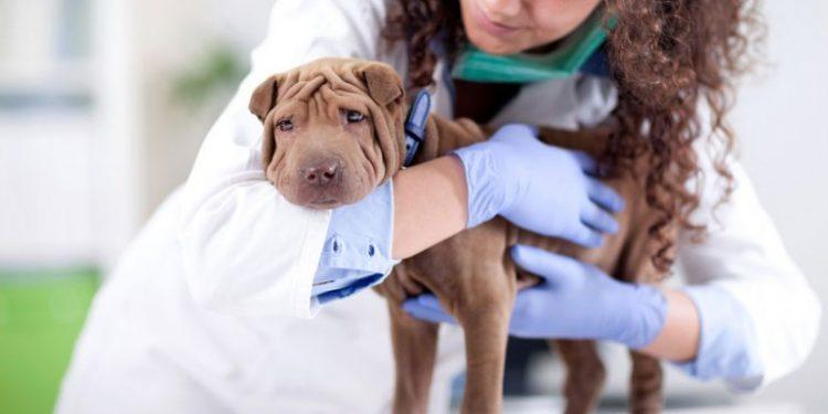 corsi per assistente veterinario
